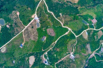 金沙江畔新华坪:黑色转绿色,荒山变金山