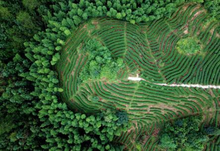 福建龙岩:高效用地,提升生态环境水平