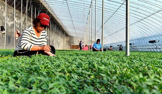 山东定陶:花红菜绿美乡村