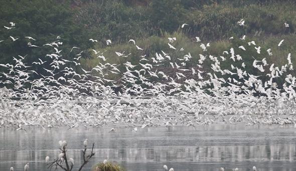 """山清水秀候鸟归——""""护鸟营""""的新年守望"""