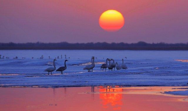 日落天鵝湖