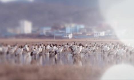 贵州草海绘就水清人欢鸟乐新画卷