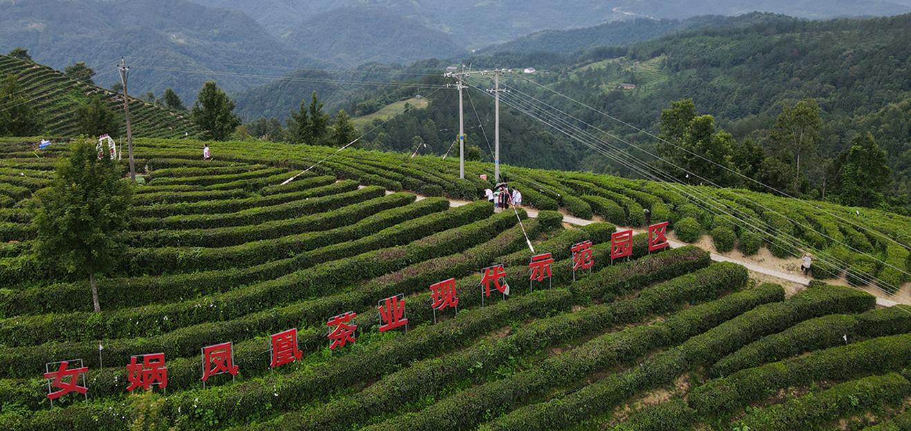 绿色的振兴——来自秦巴山区腹地的发展速写