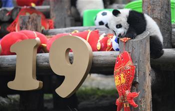 大熊貓寶寶賀新春