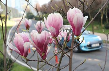伊斯坦布爾:春回大地百花開
