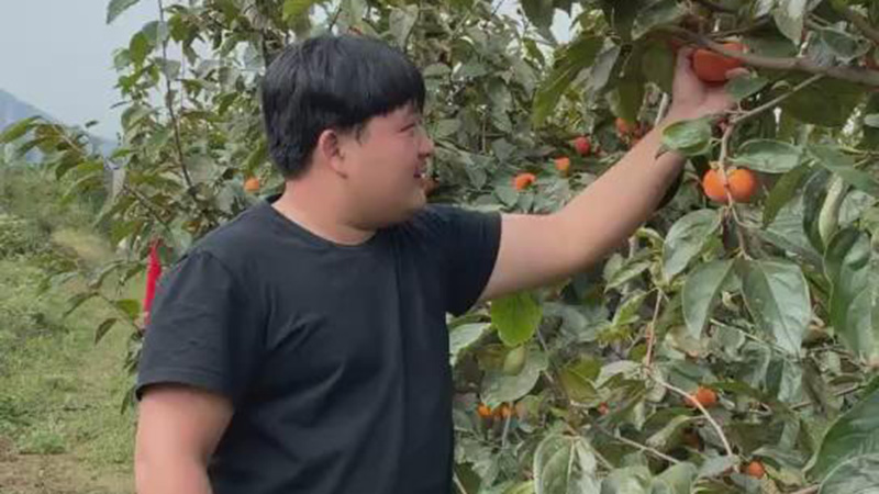 攀枝花芒果小胖