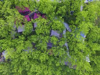 重慶北碚:棗林裏的火鍋樂園