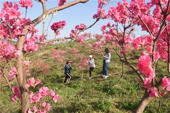花開在四月