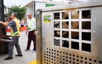 大熊貓首次安家海南島