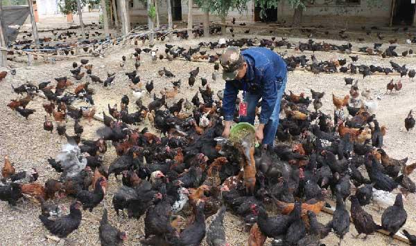 新疆 华能驻村工作队:养殖合作社给村民带来大实惠