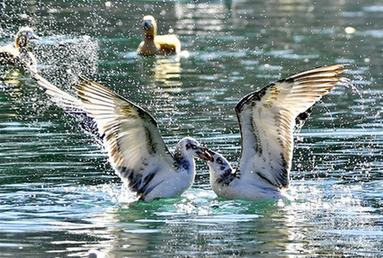 拉薩:龍王潭公園鳥盡歡