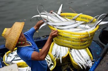 海南瓊海:出海歸來魚滿艙