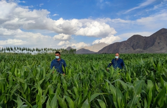 华能新疆公司:哈拉奇村幸福的日子在后头