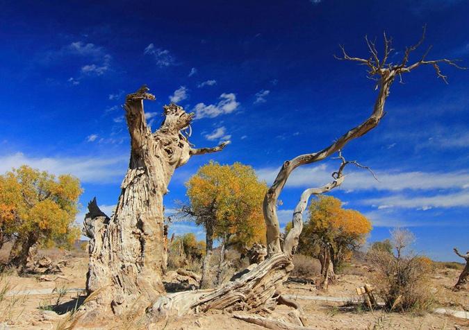 跨沙漠建电网:既要百姓用好电又要胡杨保绿洲