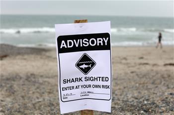 大白鯊成群出沒 南加州海灘持續關閉