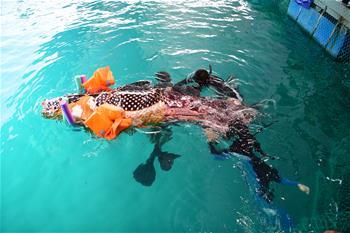 三亞受傷擱淺領航鯨死亡