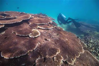 潛水教練擔任義務珊瑚保育員