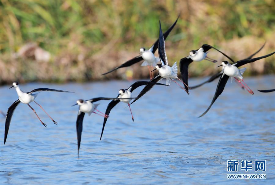 (环境)(1)湿地鸟翩跹