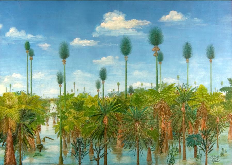南京地质古生物研究所 科学家发现3亿年前奇特树木