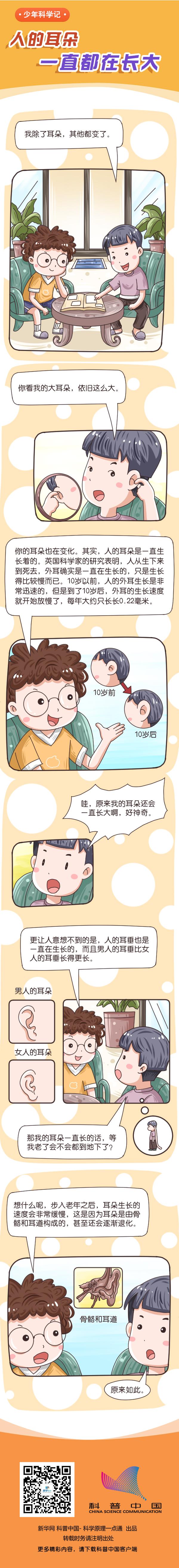 人的耳朵一直都在长大