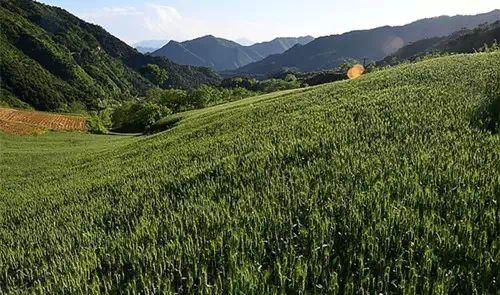 农林复合系统的研究发展