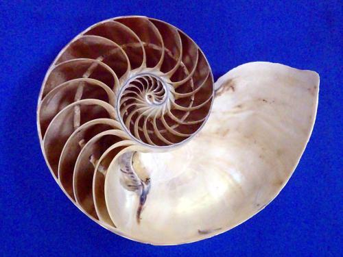 筆尖科學——鸚鵡螺