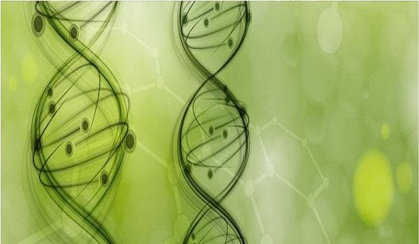 走进植物基因组学国家重点实验室