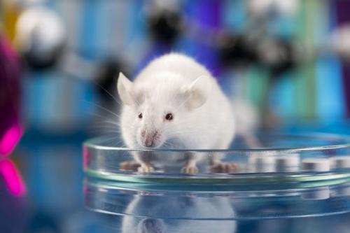 实验动物学的奥秘