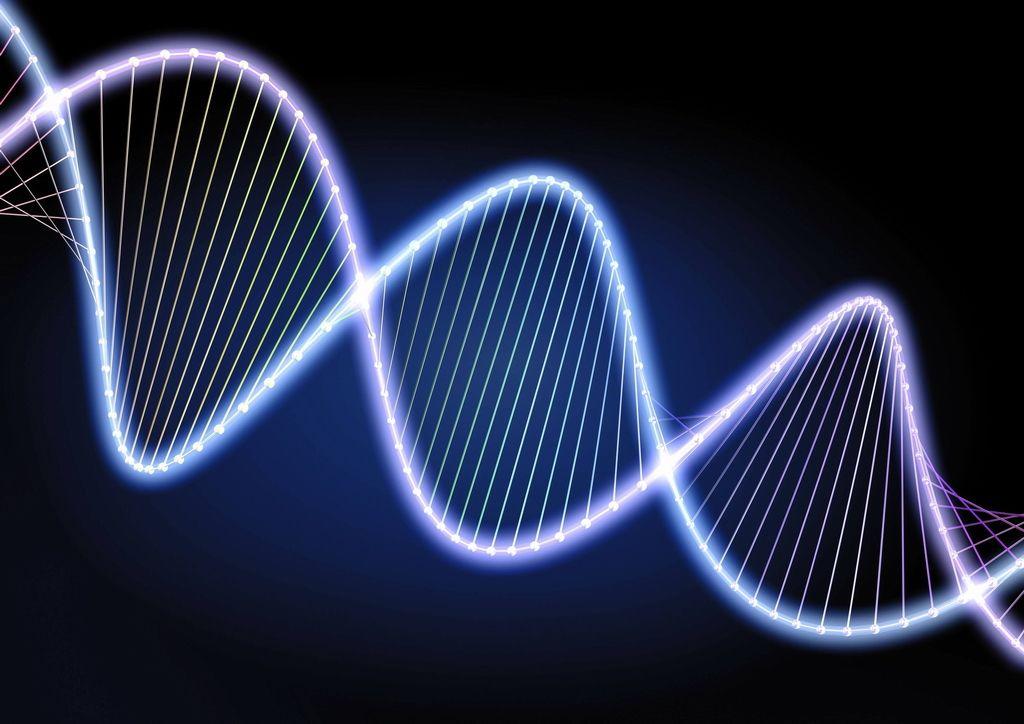 细胞核内的遗传物质——染色质
