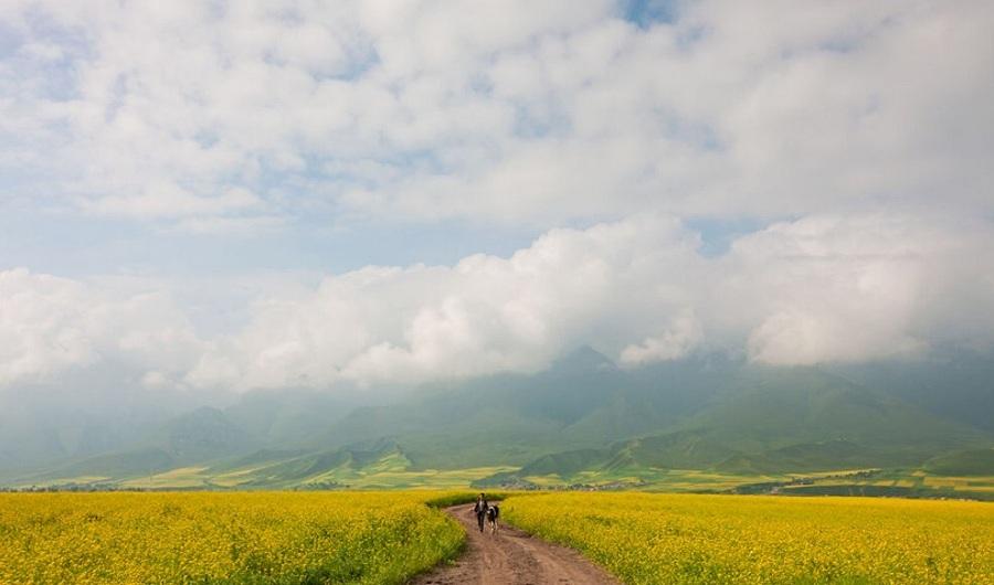农业大改造——植物的基因编辑