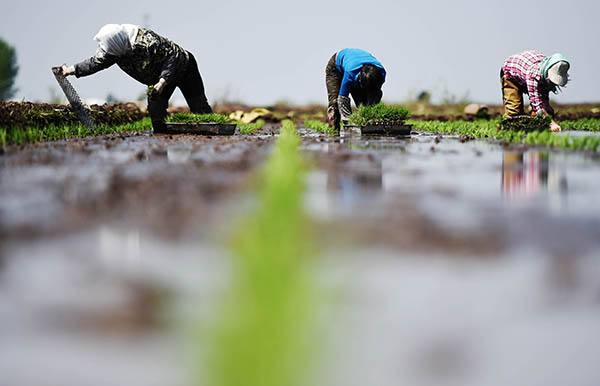 罗锡文院士:农业机械化新征程