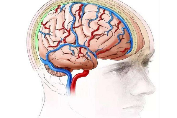 脑科学的研究计划与应用