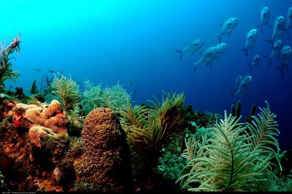 掀開大海的神秘面紗——海洋觀測