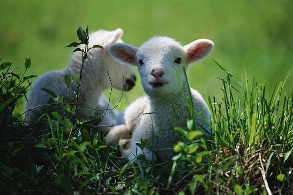 走进动物营养学国家重点实验室