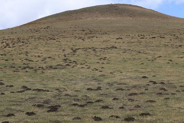 綠水青山背後的景觀生態學