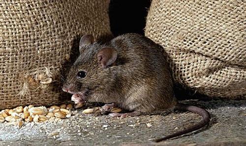 张知彬研究员:探寻生态调控鼠害新方法