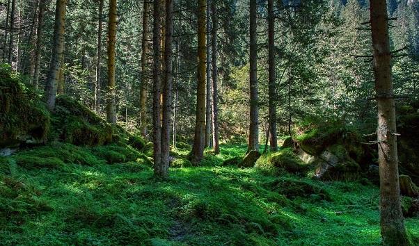 種上萬億棵樹或能緩解全球變暖