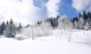 一分為二看降雪