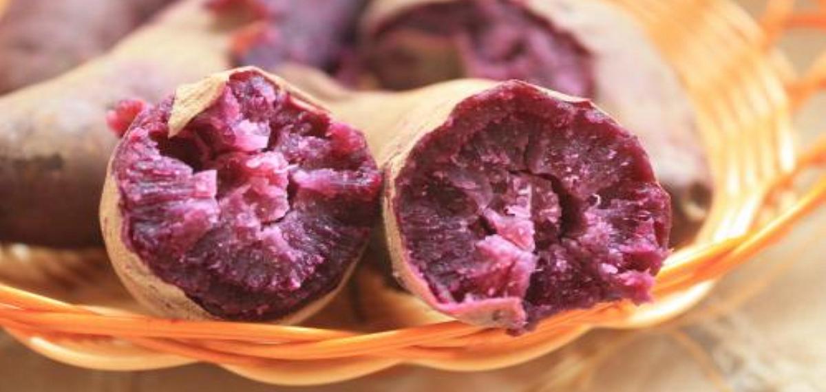 紫薯好看但不是轉基因品種