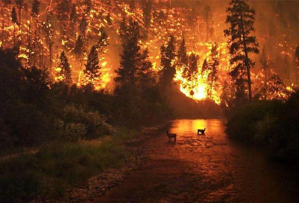 关于森林火灾,这些事要知道!