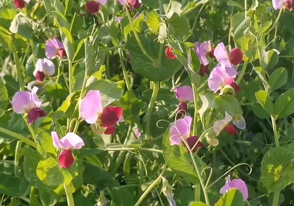 植物生殖的奧秘