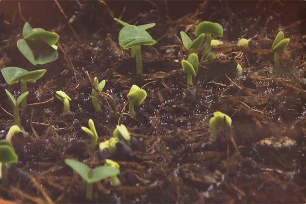 植物生物反應器之美