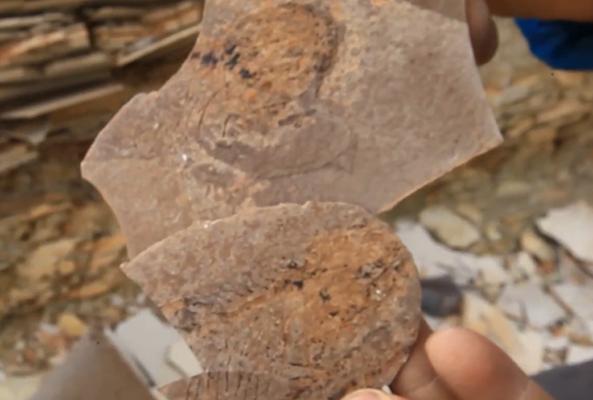 江左其杲:鲜为人知的古生物研究