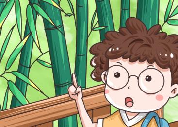 竹子為什麼長不粗?