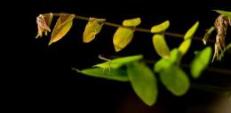 陈晓亚:生命的传递 分子遗传