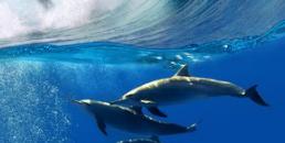 苏纪兰:海洋的可持续发展