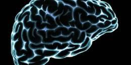 大脑对人类的重要性