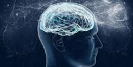 脑科学的研究进程