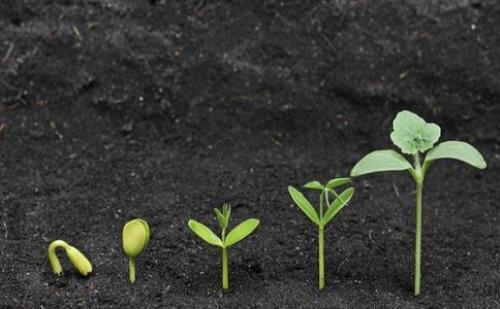 植物发育生物学的探究发展