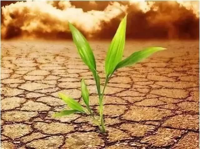环境——生物发育的掌控者